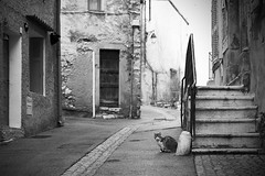 Street Cat (loic.pettiti) Tags: programmanual lens2470mmf28gvr f32 speed11250 iso720 focallength66mm affinetuneadj17 focusmodeafc afareadynamicarea3dtracking shootingmodesingleframe autoiso vron meteringmodemultisegment wbauto1 picturecontrolauto focusdistance1334m dof854m10311886 hyperfocal4531m