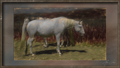 Puttelange 2018 05 - 020 lrTpz1 hd chevaux