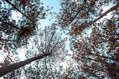 Tree of life - Da Lat, Viet Nam (jkharryhuy) Tags: dalat da lat forrest trees clouds sky leaves leaf