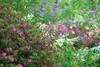 Azalea Garden (JMS2) Tags: flowers garden spring azalea colors bokeh nature plants bushes