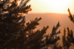The light of sunset (MIKAEL82KARLSSON) Tags: natur naturbild nature sol solnedgång sun sunset ljus light magic sverige sweden bergslagen dalarna grängesberg gränges saxberget träd skog forrest trees tall gran pentax k70 sigma 70300mm explore explorer expo mikael82karlsson närbild