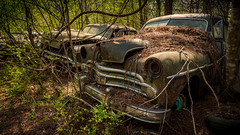 Waiting On The Dream (Wayne Stadler Photography) Tags: abandoned preserved junkyard georgia classic automotive derelict overgrown vehiclesrust rusty retro vintage oldcarcity rustographer rustography white