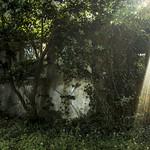 Wasteland/11 thumbnail