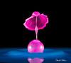 _D187046-Umbrella-on-large-bubble-no-inner-stem (Carol Cohn) Tags: water waterdrops drops droplets liquids liquidsculpture splash splashphotography gotas tropfen splashart macro highspeedphotography