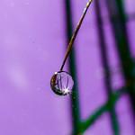 goutte d'eau..  drop thumbnail