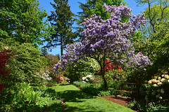 The Glades Garden Park - Surrey, BC (SonjaPetersonPh♡tography) Tags: cityofsurrey southsurrey surrey britishcolumbia bc theglades gardens thegladesgardenpark park plants flowers mothersday may nature paths trails ponds trees estate thedewolfs rhododendrons azaleas outdoors