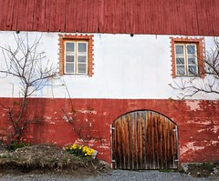 striped barn (ekelly80) Tags: norway april2018 spring møreogromsdal valldal linge farmhouse airbnb evening light goldenhour farm orchard barn red striped wooden gate door windows flowers yellow daffodils tulips sun