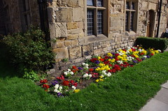 IMGP9278 (Steve Guess) Tags: durham cathedral university england gb uk unesco world heritage site daffoldil