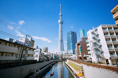 TOKYO SKYTREE_東京スカイツリー_9 (hans-johnson) Tags: tokyo spring skytree tokyoskytree sky tree blue white sumida sumidaku landmark kanto japan 東京 スカイツリー 東京スカイツリー スカイ ツリー 墨田 墨田区 東武 テレビ タワー tower 関東 関東地方 日本 アジア travel asia 戶外 塔 隅田川 16mm 城市 red flower plant nature skyscraper building canon eos 5d 5d3 vsco architecture skyline day light daylight 1635mm asian downtown trip tour landscape hdr city urban metropolis metropolitan reflection scape river boat azul bleu sunshine shine sunny people capture nice water