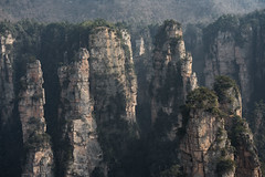 Among Giants - China (virtualwayfarer) Tags: zhangjiajieshi hunansheng china cn zhangjiajie nationalpark unesco worldheritage unescoworldheritage spires mountain mountains chinese hunanprovince avatarmountains avatar mist fog forest nature naturephotography landscape landscapephotography cliffs mountainrange dramaticnature snow snowcapped sony sonyalpha sonya7rii hallelujahmountain avatarmountain pandora pandoramountains 張家界 scenery pillar alexberger virtualwayfarer afternoonlight light visittochina