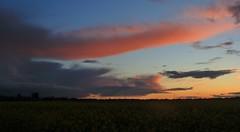 Sunset (alasdair massie) Tags: cambridge barton sunset sky