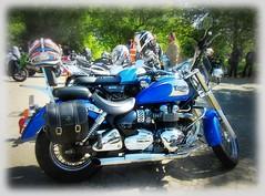 Triumph Bonneville 'America ' (John(cardwellpix)) Tags: sunday 6th may 2018 triumph america newlands corner guildford surrey uk