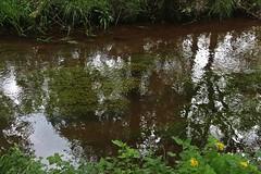 De Dommel (just.Luc) Tags: reflection reflections reflexion water wasser eau river rivier rivière fluss limburg limbourg vlaanderen flandres flanders belgië belgien belgique belgica belgium europa europe gaia natuur nature