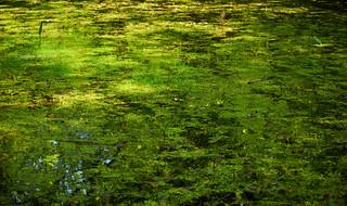 Impressionist nature
