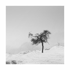 Wild child in a snowstorm (Nick green2012) Tags: tree snowstorm dartmoor square blackandwhite silence landscape
