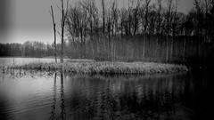 The Pond 2 (Jeffery Womack) Tags: mayburystatepark 2018earylyspring nature water blackwater hikingtrails michigan pond trees reeds smartphonephotography blackandwhite novi samsunggalaxy8plus lake monochrome dramaticmonochrome northville unitedstates us