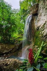islands waterfall (Plamen Troshev) Tags: waterfall flowers jungle santa lucia pool green tree wind beauty explore adventure new nature
