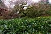 Japanese Maple (MikeWeinhold) Tags: red portlandjapanesegarden maple japanesemaple tree 6d 1740mm