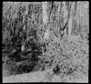 May 2018. Tuchola Pinewoods Part 2. DIANA BABY 110 (yerzmyey) Tags: diana baby 110 16mm orca lomo lomography lofi nature forest lake pinewoods tuchola square yerzmyey