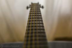 089A6530_1 copy (Paul Robinson Photography UK) Tags: guitar music instrument fender vibrant macro