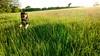Bouncing through the meadow (allybeag) Tags: spring crosby xperia phonepic kiri dog bouncing bounding long grass evening light