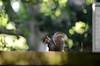 A spring walk in Warley Place (bexforeman17) Tags: essexwildlifetrust beams sunlight trees forest spring garden naturereserve squirrel