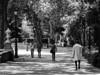 Paseo del Prado (Lea Ruiz Donoso) Tags: paseodelprado jardin arboles farolas fuente agua calle gente ciudad madrid hx350 sony blackandwhite blackwhite blancoynegro monocromo
