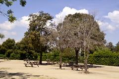 JARDINS DE JOAN BROSSA (Yeagov_Cat) Tags: 2018 barcelona catalunya montjuïc jardinsdejoanbrossa jardins joanbrossa jardinsjoanbrossa 2003