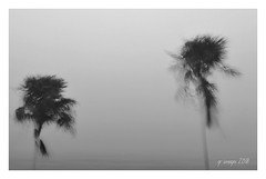 And More Rain (GR167) Tags: iphoneography iphoneart bw dreamy blackandwhite landscape weather icm monochrome slowshutter rain iphone8plus