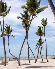 _U7A0136 (Eric.Burniche) Tags: dominican dominicanrepublic caribbean beach palmtree ocean water sand vacation island