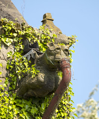 Gagged Gargoyle (simonannable) Tags: gargoyle monster gothic style design scary archic fujifilmxt2 muzzled gagged feeding tube bizarre wierd fantasy creature mythical sad snout gag roof drainpipe breedononthehill church ivy tower vintage statue sculpture neglected