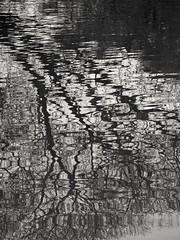 B & N (carlos_ar2000) Tags: agua water reflejo reflected reflection distorsion distortion arte art onda wave abstracto abstrac buenosaires argentina