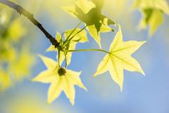 Spring Lightness (NathalieSt) Tags: aimargues camargue europe france gard languedocroussillon nature nikon nikond750 nikonpassion nikonphotography parcdandron printemps spring