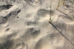 Crab Sand Prints (SeannPatrickPhotography) Tags: outerbanks coast atlantic northcarolina nc obx beach midatlantic ocean