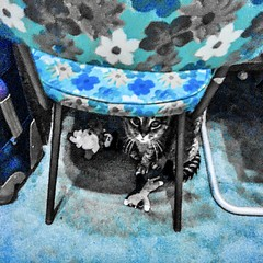 """Learned we may be with another wo/man's learning: we can only be wise with wisdom of our own."" ―Michel de Montaigne 🐈 (anokarina) Tags: 🐈 psmobile adobephotoshopexpress colorsplash appleiphone6s highlands louisville kentucky ky cat kitten kitty pet chair furniture flowers floral pattern blue aquamarine"