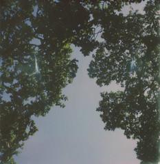 oak (lawatt) Tags: oak tree branches leaves green sunshine film instant theimpossibleproject sx70 roidweek2018