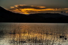 _DSC0669-1 (lluisg8207) Tags: banyoles girona catalunya atardecer sunset sonya7rm3 penyafotogràficabadalona nsfotografía nsexperience paisaje landscape paissatge