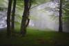 Luces del Bosque IV / Lights in the forest (Cruz M. Vicente) Tags: navarra bosque niebla