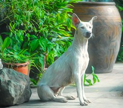 Bangkok Soi Dog (Steve4343) Tags: steve4343 bangkok soi dog red white orange yellow bowl brown k9 street scene plants flowers spring summer fall