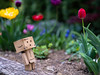 Walk in a park (slo.Metallc) Tags: flowers flower tulip danbo danboard garden spring blooming nature outdoor sonyilca99m2