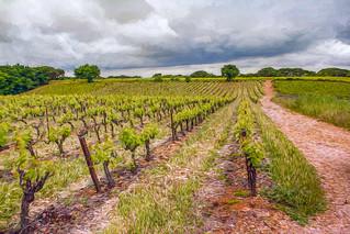 Vignoble de Vauvert