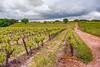 Vignoble de Vauvert (Xtian du Gard) Tags: xtiandugard vineyard vignoble vauvert gard painting digiart