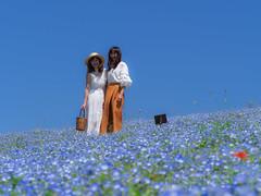Blue Beauties (elenaleong) Tags: tokyo18hitachiseasidepark hitachieseasidepark ibarakiprefecture miharashihill blueeyeflowers nemophila bluehill elenaleong japan landscape 粉蝶花 ひたち海浜公園