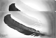 FEATHER IN BLAK & WHITE-II22 (jawadn_99) Tags: interrestingness sky art creative photography shadow performance black white feathers birds roosters wild kuwait explore