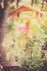 Lunchtime (Ro Cafe) Tags: garden spring springtime birdie birdfeeder fence green flower clematis sunny nikkormicro105f28 nikond600 textured