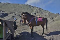 "INDONESIEN, Java, Menschen und Pferde in der Caldera (Sandmeer) Am Tengger-Vulkanmassiv (Bromo) ......INDONESIA, Java, people and horses in the caldera (sandy sea) At the Tengger volcano massif (Bromo), Blick zum  Kraterrand, 17453/10012 (roba66) Tags: urlaub reisen travel explore voyages visit tourism roba66 asien asia inselstaat java ostjava bromo vulkan volcano ""gunungbromo"" stratovulkan tenggermassiv"" nationalpark ""semerumassif"" caldera sandmeer krater crater mountain berge range naturalezza mountains montana felsen rock rocks landschaft landscape paisaje nature natur tier tiere animal animals creature pferd horse cheval chevaux caballo trabalho"