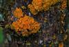Lichens (kyleddsn) Tags: ogden utah spring hiking