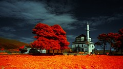 * (Timos L) Tags: landscape tree sky clouds mosque ir infrared urban olympus ep1 panasonic 1232mm timosl