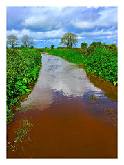 There may be trouble ahead! (JulieK (thanks for 8 million views)) Tags: 2018onephotoeachday flood countryside lane road river water trees hedges wexford ireland irish iphonese reflection clouds bluesky rural foliage hss sliderssunday