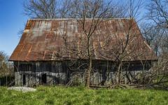 Rural Decay (will139) Tags: ruraldecay wooden barn rust rustyroof ruralindiana farm abandoned trees